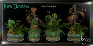 TLG - Jiwa Tenang Pot Plant Set